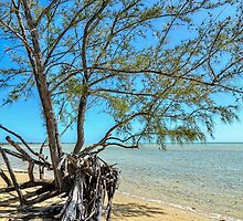 Lonely Tree on the Beach... by 242Digital