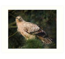 Tawny Eagle Art Print
