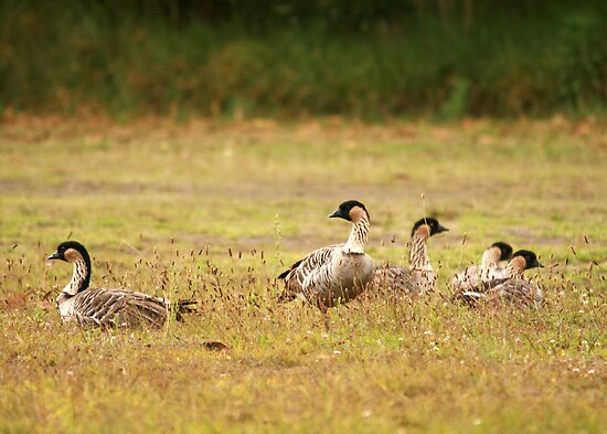 Nene Geese on the Lam by Maurine Huang