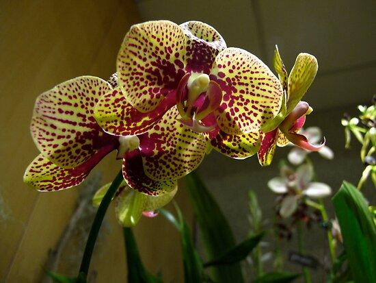 Orchids abound by MarianBendeth