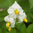 Yellow & White Flower by TCbyT
