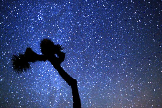 Sea of Stars Galaxy Over Joshua Tree by Gavin Heffernan