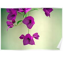 Delicate Flowers Pretty in Pink Poster