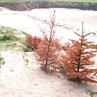 Porth Trecastell Beach by LADeville