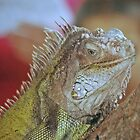 Iguana by scott staley