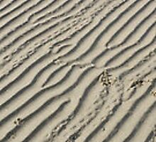 lines in the sand by Jacqueline Eirian McKay
