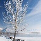 Lake Tree  by Nicole  Markmann Nelson