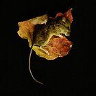 Beauty in Death  by Helen J Cherry