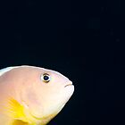 Anemone fish by Emma M Birdsey