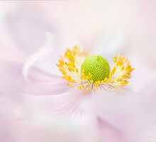 Japanese Anmeone by Jacky Parker