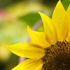 Sunflower by BengLim