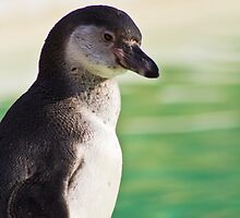 Portrait of a Penguin by vivsworld