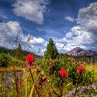 North Sister ~ Indian Paintbrush ~ by Charles & Patricia   Harkins ~ Picture Oregon