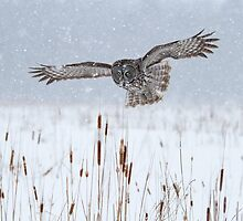 Snowy Marsh by Bill McMullen