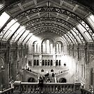 The Natural History Museum London by Mark Williams