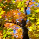 Fall impression 10 - 2012 by Joseph Rotindo