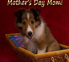 Mother's Day Sheltie Puppy by jkartlife