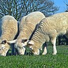 The 3 Woolly Jumpers by Barrie Woodward