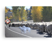 "Whadda ya mean you want to go back…..can't you read the sign????  It says 'No Ewe Turn"" ! Canvas Print"