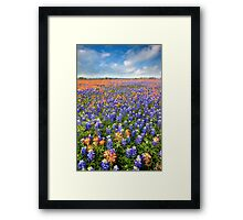 Bluebonnet Field near Whitehall, Texas Framed Print
