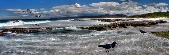 Sea birds@beach-pano by Kip Nunn