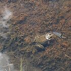 Frog in a Lake by MsSexyBetsy