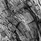 Wood Mosaic BW by PierPhotography