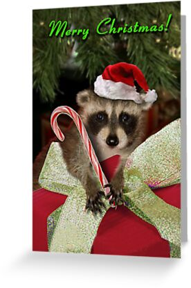 Christmas Raccoon by jkartlife