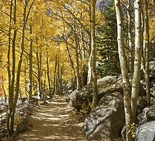 Aspen Tree Path, Rocky Mountain National Park, Colorado by RobGreebonPhoto