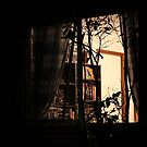 The Library Window by aussiebushstick