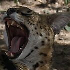 Serval Yawn by InnerSees