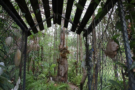 The Entrance to a Rainforest Garden by aussiebushstick