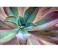 Organic Beauty Photographic Print