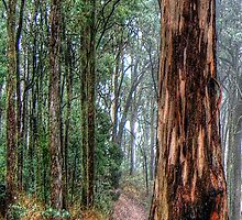A Road Less Travelled - Victorian Alps (Vertical Crop)  - The HDR Experience by Philip Johnson