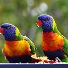 Rainbow Lorikeet by Loreto Bautista Jr.