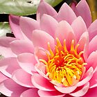 Lace Gem Lotus Flower by DavidsArt