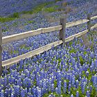 Bluebonnets and an Old Wooden Fence in the Texas Hill Country 1 by RobGreebonPhoto