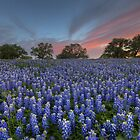 Bluebonnet Field of Glory, San Saba County, Texas by RobGreebonPhoto
