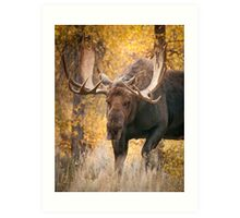 Bull Moose in the Aspens Art Print