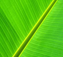 Banana Leaf Sabre by Mistral Hill  Photography