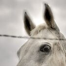Horse Behind Wire by Stellina Giannitsi