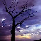 Summer Hill Tree Dusk ... by Erin Davis