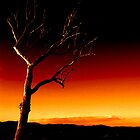 Summer Hill Tree - Fire Sky ... by Erin Davis