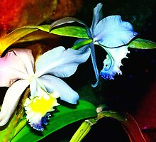 Pond orchids in a splay of color by ♥⊱ B. Randi Bailey