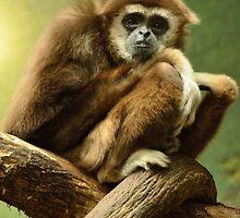 Lar Gibbon II by Jacqueline van Zetten