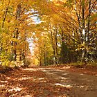 Autumn yellow trees over a back road by DArthurBrown