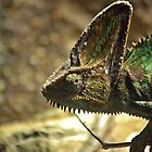 Chameleon by scott staley