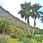 The Palms and the Ko'olaus by David Davies