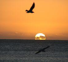 Sunset at Brighton,2013. by elphonline