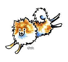 Cute Orange & White Pomeranian by offleashart